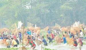 বিশ্বনাথে ঐতিহ্যবাহী 'পলো বাওয়া' উৎসব সম্পন্ন